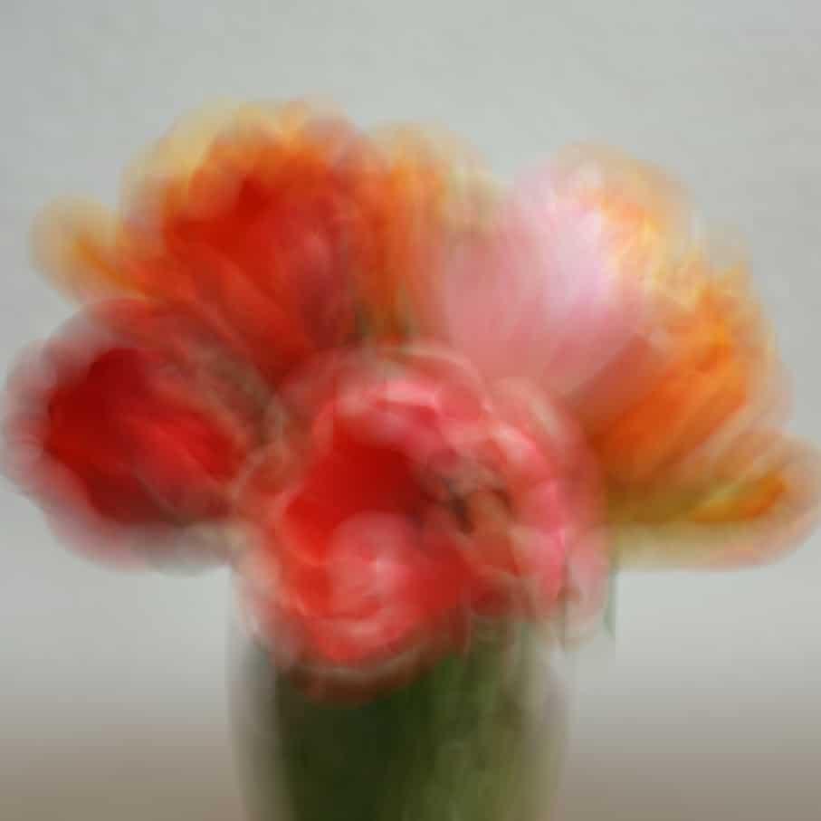 1. FLOU-Tulipes 4C
