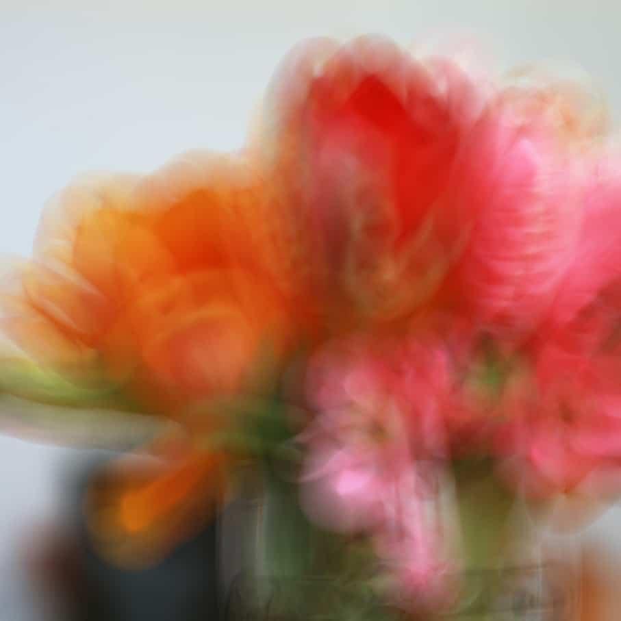 3. FLOU-Tulipes 1C